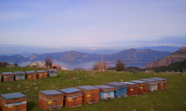 Bee-keeping on the Lycian Way