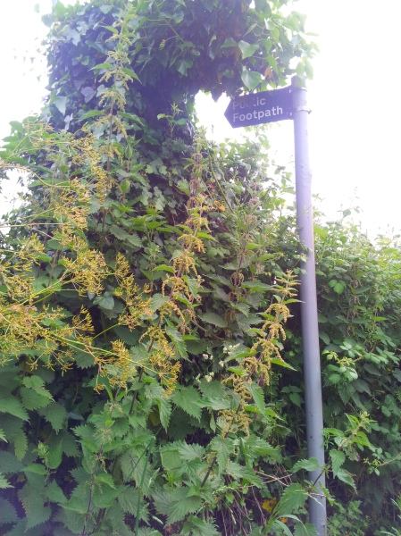 Nettles make public paths impossible to use!