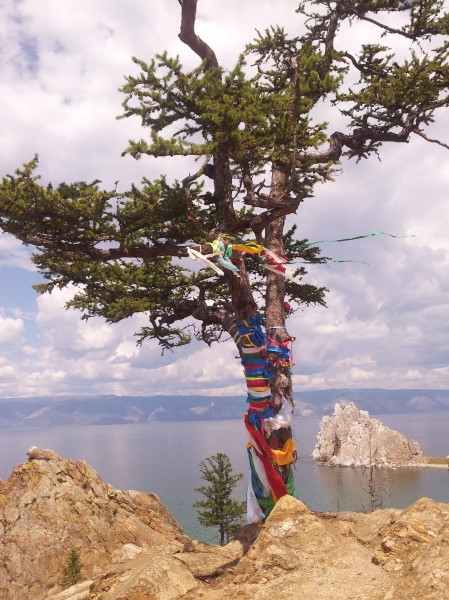 A sacred tree, with Shaman Rock in the background