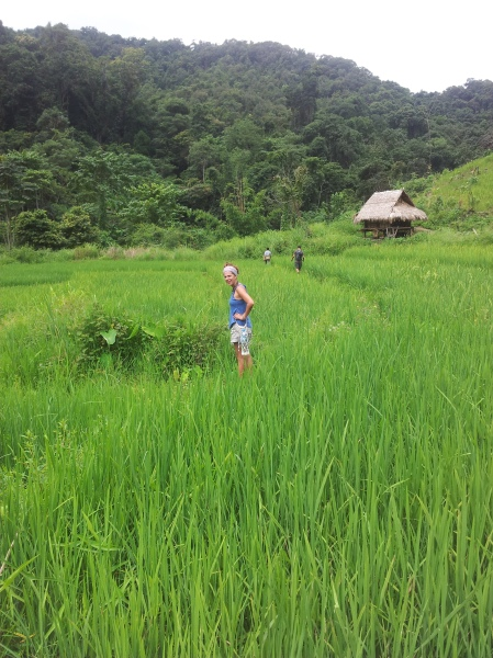 Hiking through rice paddies
