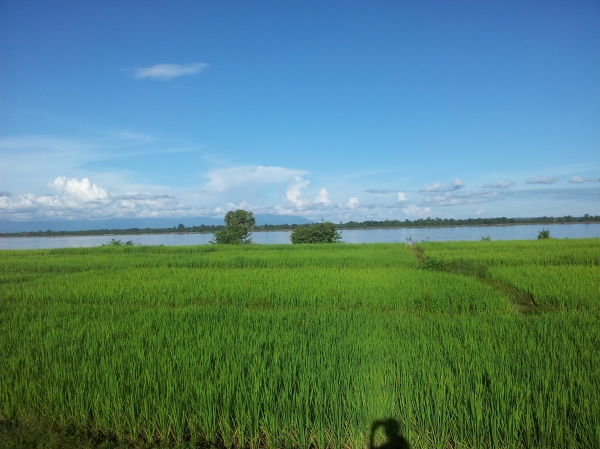 Just me and the rice paddies...