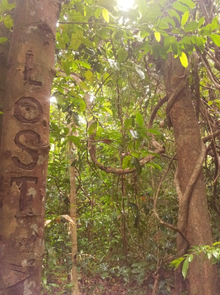 Lost in the jungle, I laugh as I come across this carving on a tree