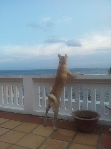 Leo looks out to sea