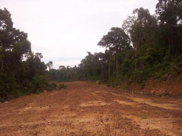 The start of the destruction of Koh Ta Kiev - a road through the rainforest