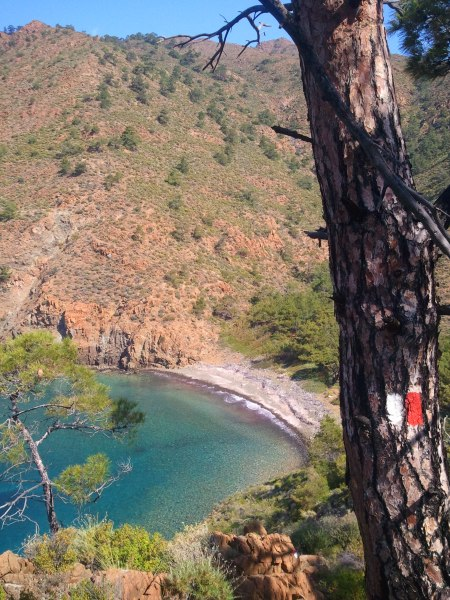 A waymarker on a pine tree (yes, I have to climb up the mountain on the other side of the beach!