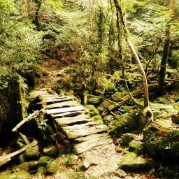 Moss & monkeys in Yakushima